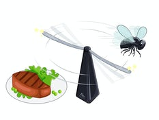 Mother's Day Gifts 2019 - Gardigo Fly Scare Insect Repeller,